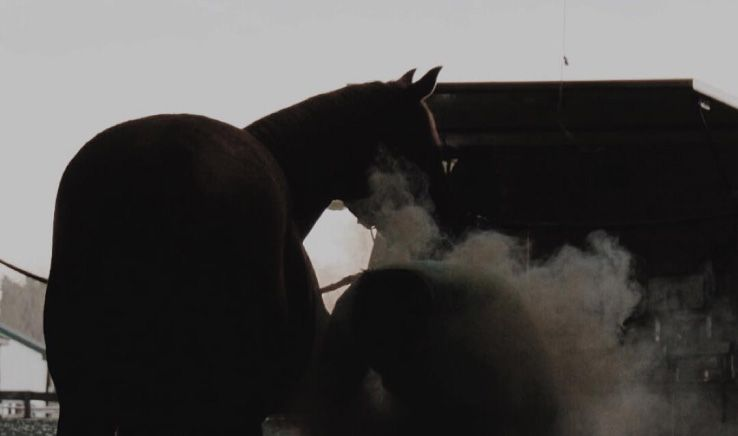 two horse kicking up dust