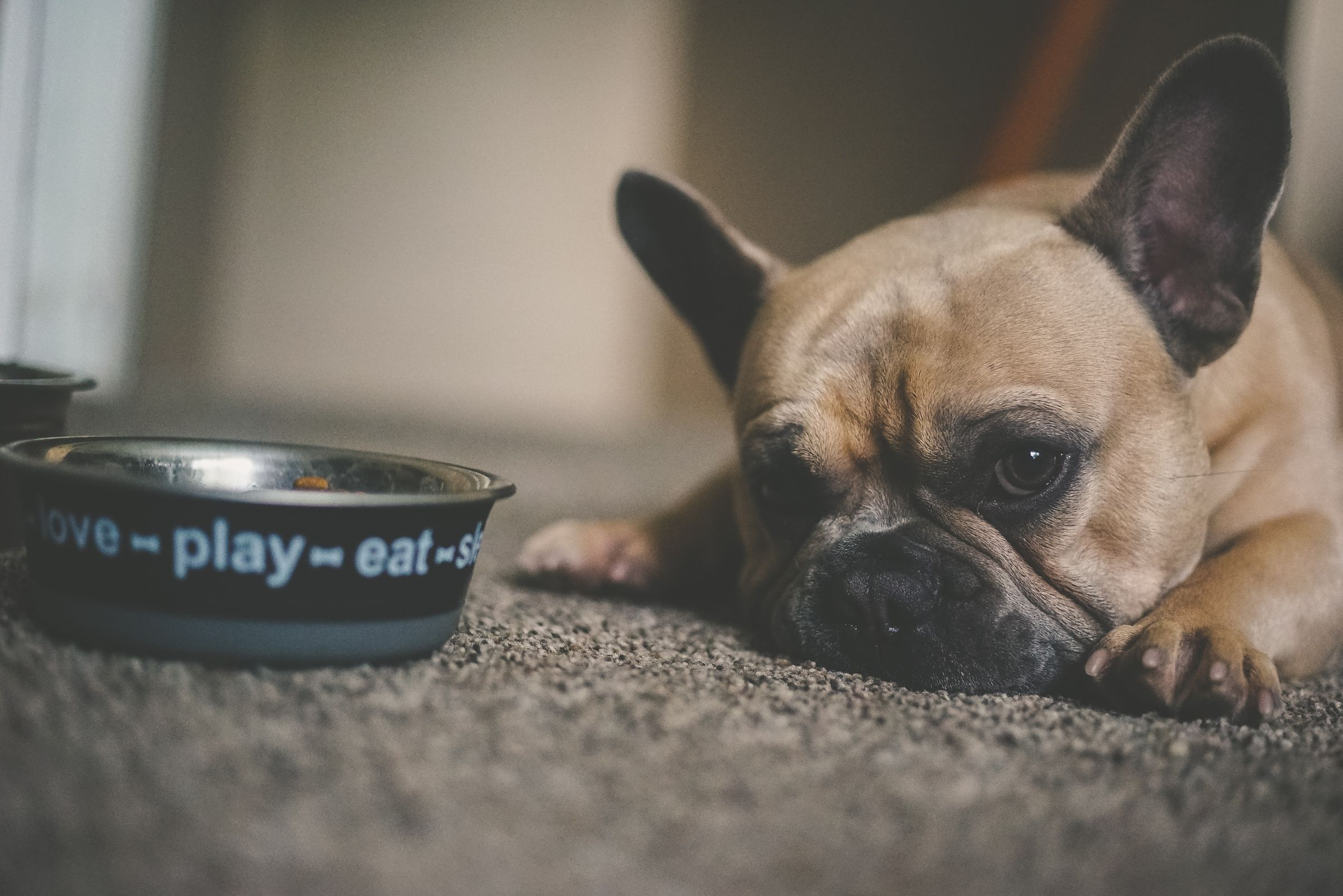 Can Gut Health Affect Your Dog's Behavior?