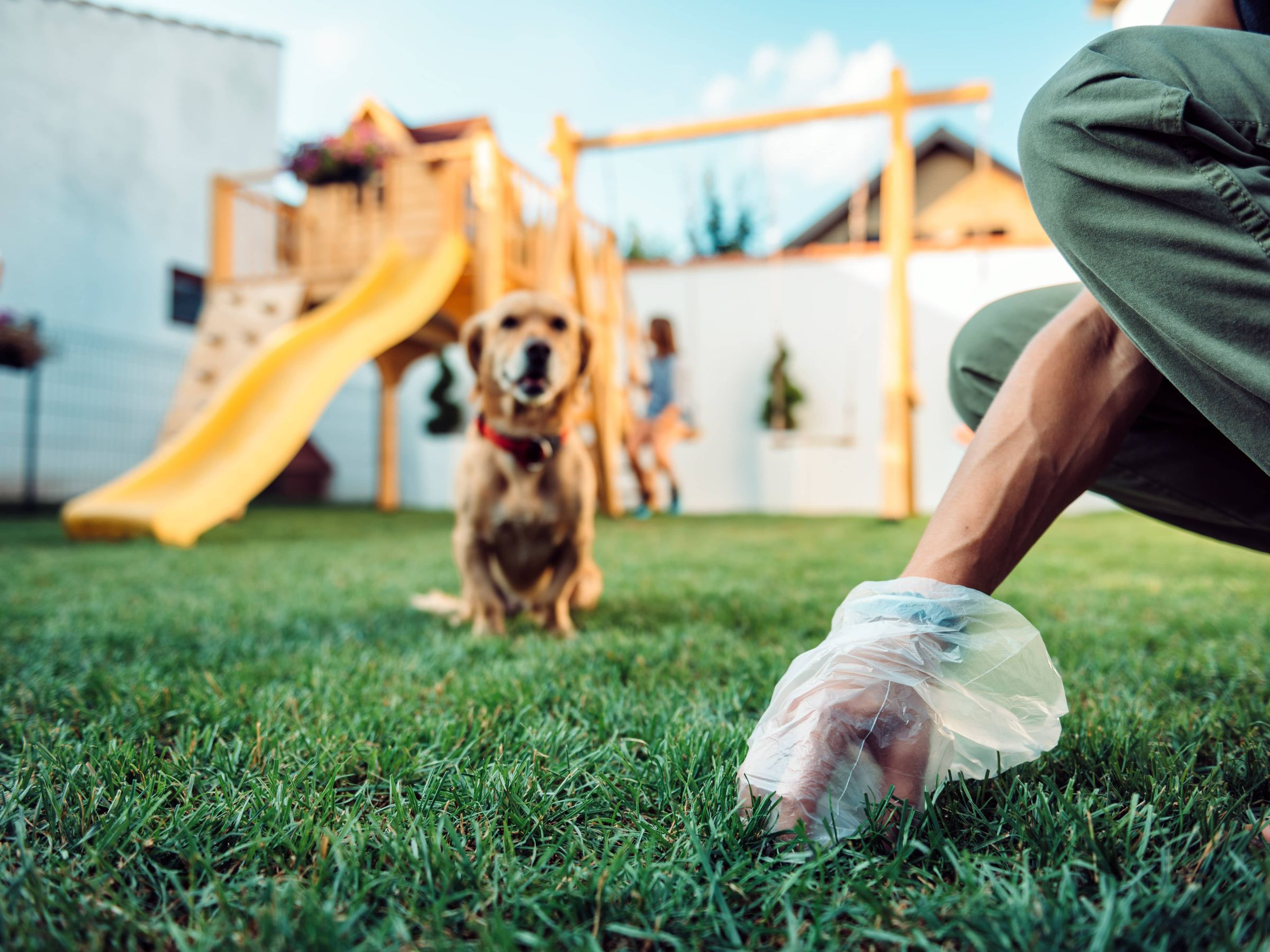 A Guide To Your Dog's Poop