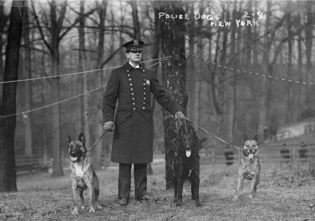 Early black and white photography of a formal policeman with three dogs