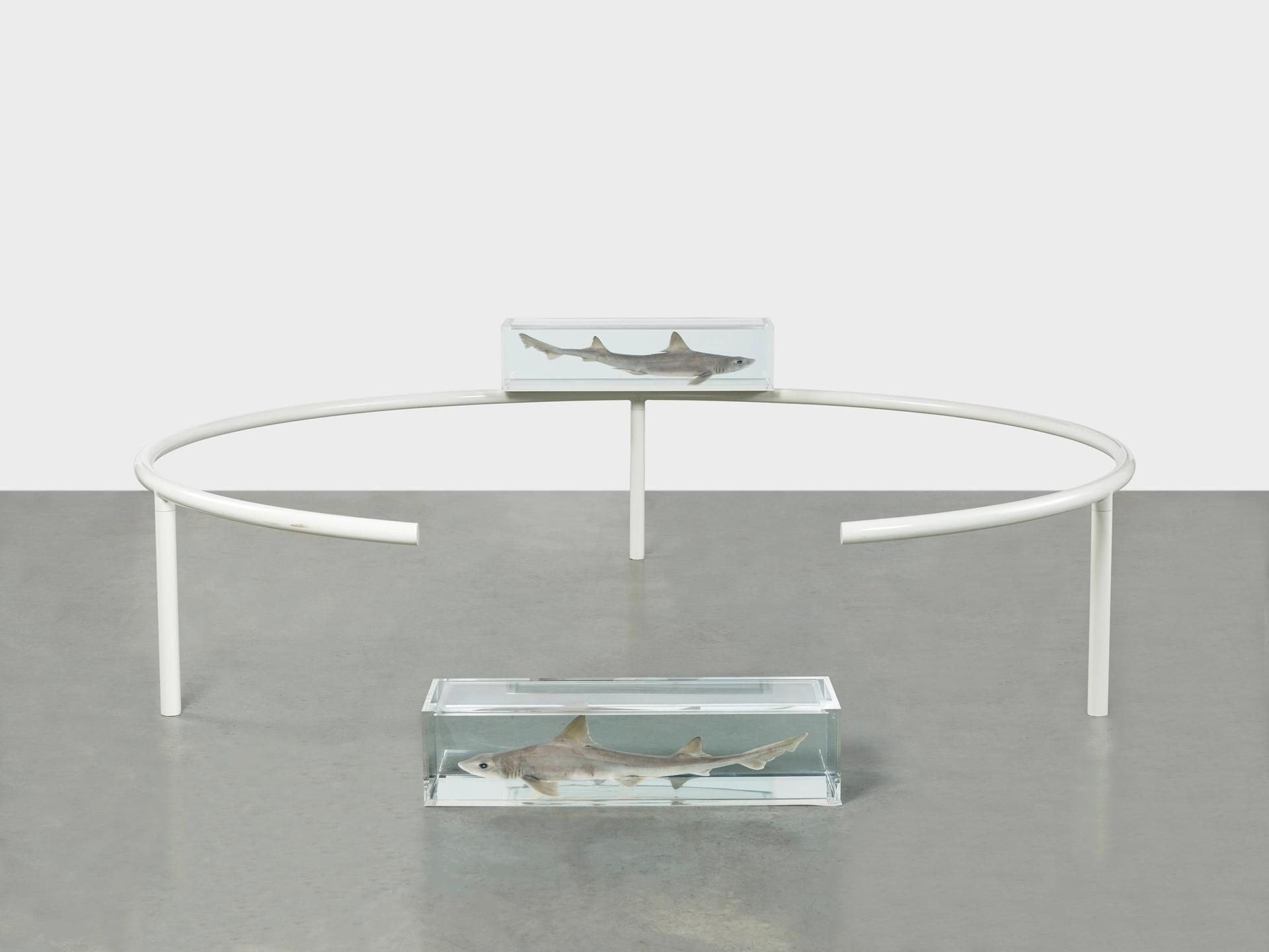 Two Similar Swimming Forms in Infinite Flight (Broken), (1993) Photographed by Prudence Cuming Associates. ©Damien Hirst and Science Ltd. All rights reserved, DACS 2020