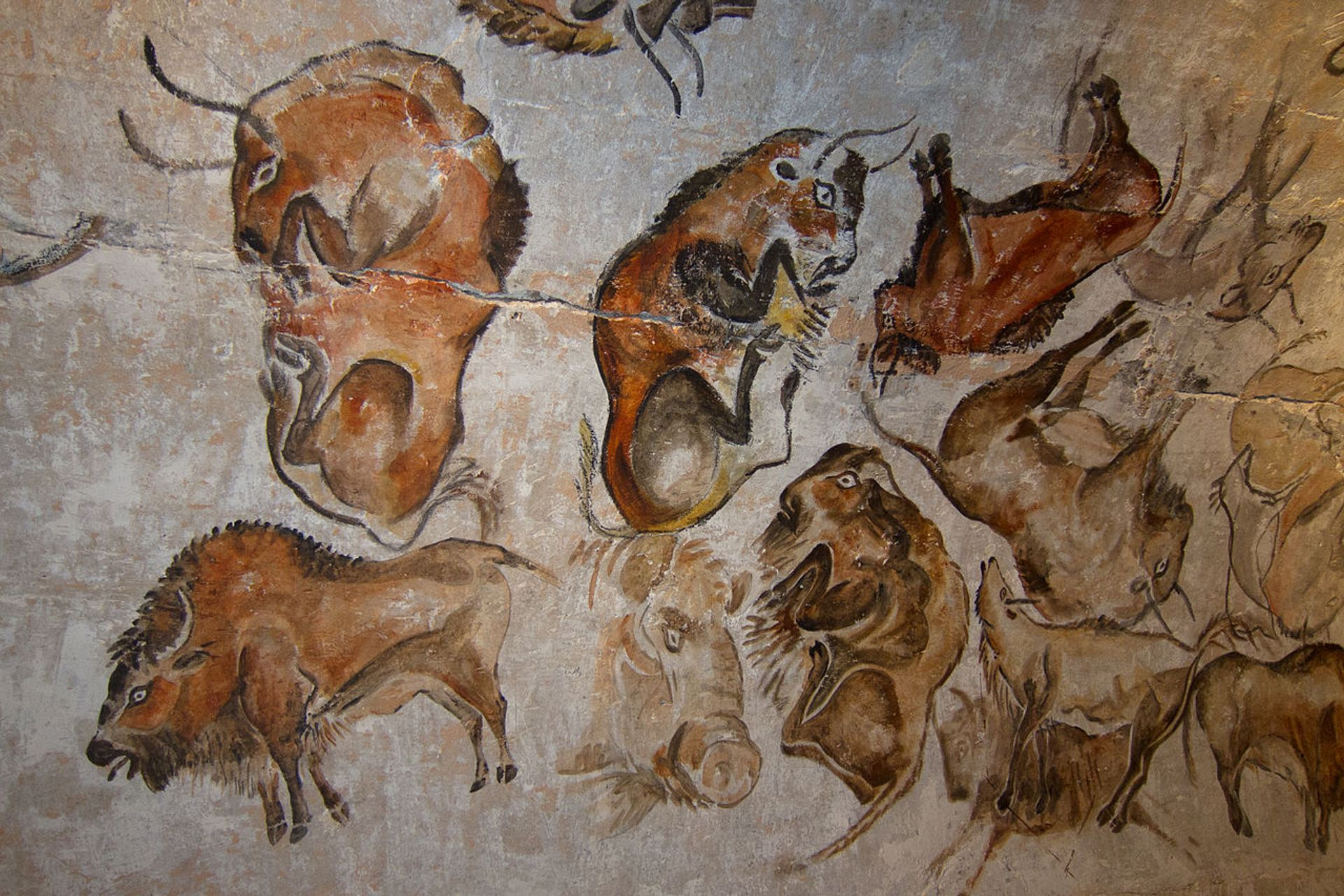 Bison depicted at the Altamira cave in northern Spain Thom Quine