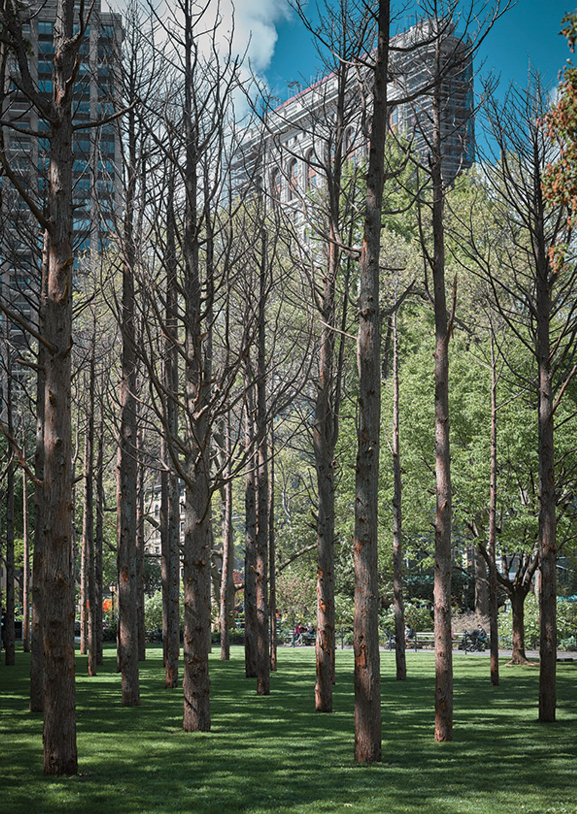 Maya Lin has sunk 49 40ft-tall salvaged whitecedarsinto Madison Square Park Photo: Andy Romer; courtesy the artist and Madison Square Park Conservancy