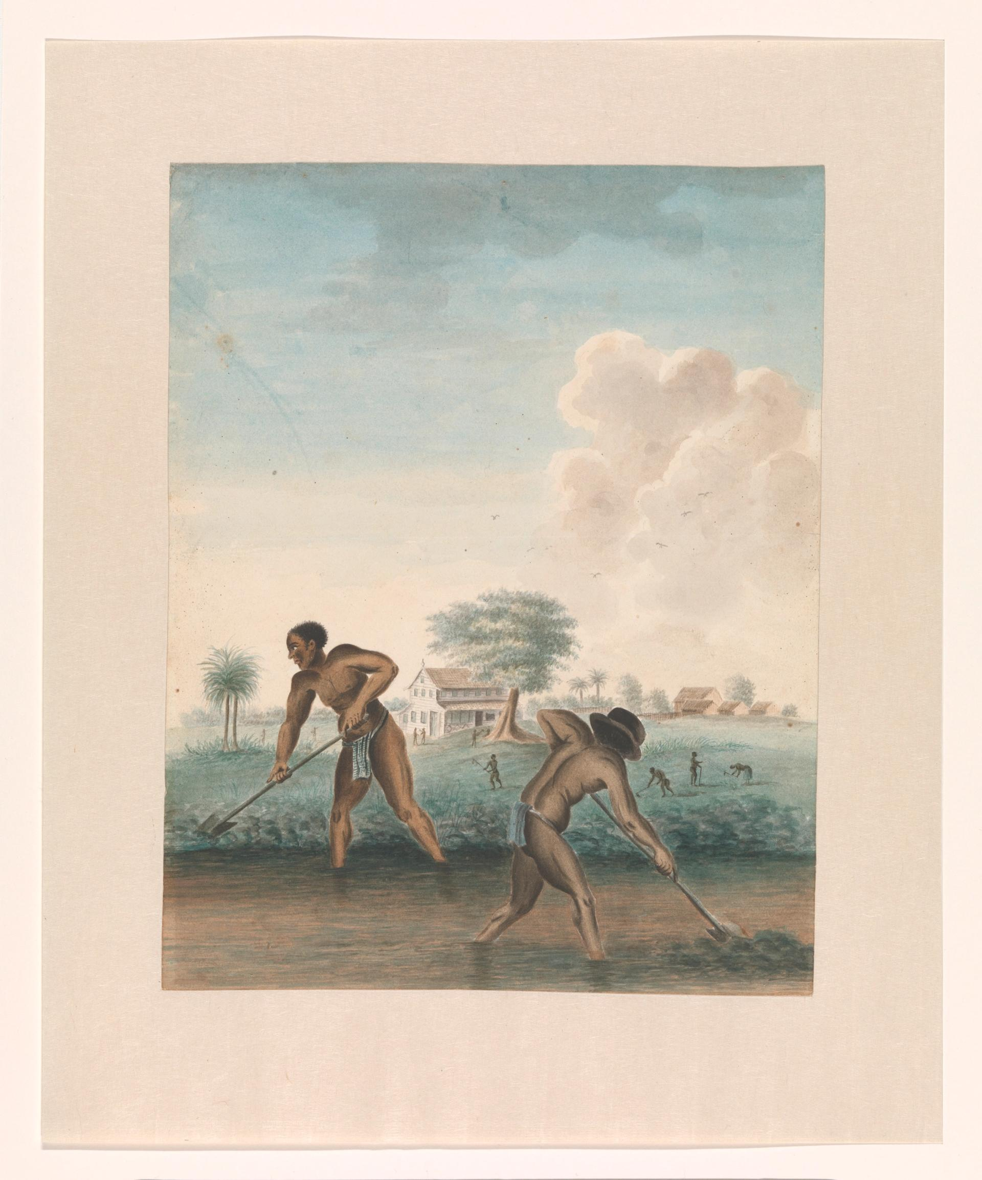 Enslaved man working on the fields by an unknown artist (around 1850) Courtesy of the Rijksmuseum. Purchased with support from the Johan Huizinga Fonds/ Rijksmuseum Fonds
