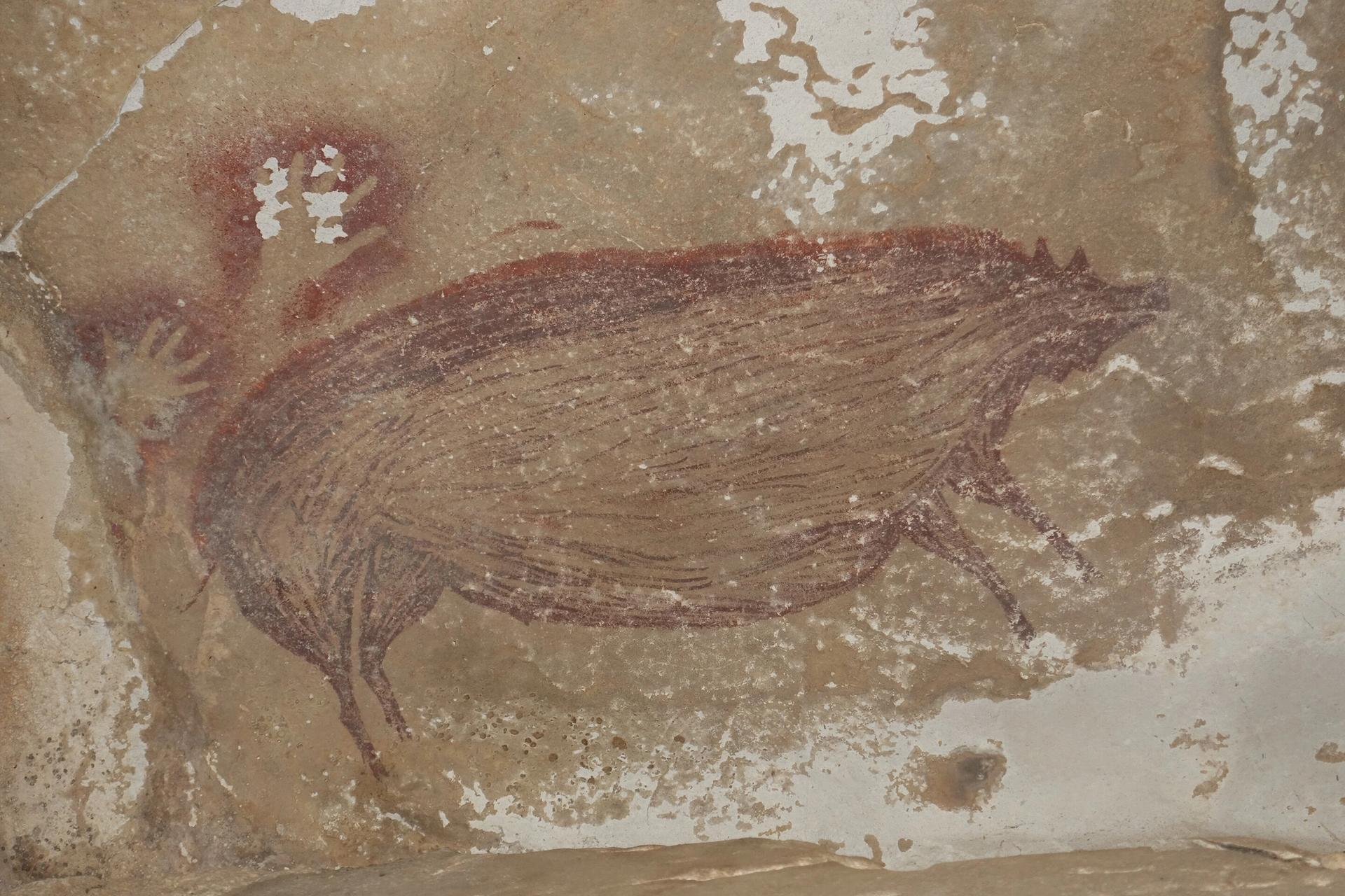The pig painting at Leang Tedongnge cave, Sulawesi © A. A. Oktaviana, ARKENAS/Griffith University.