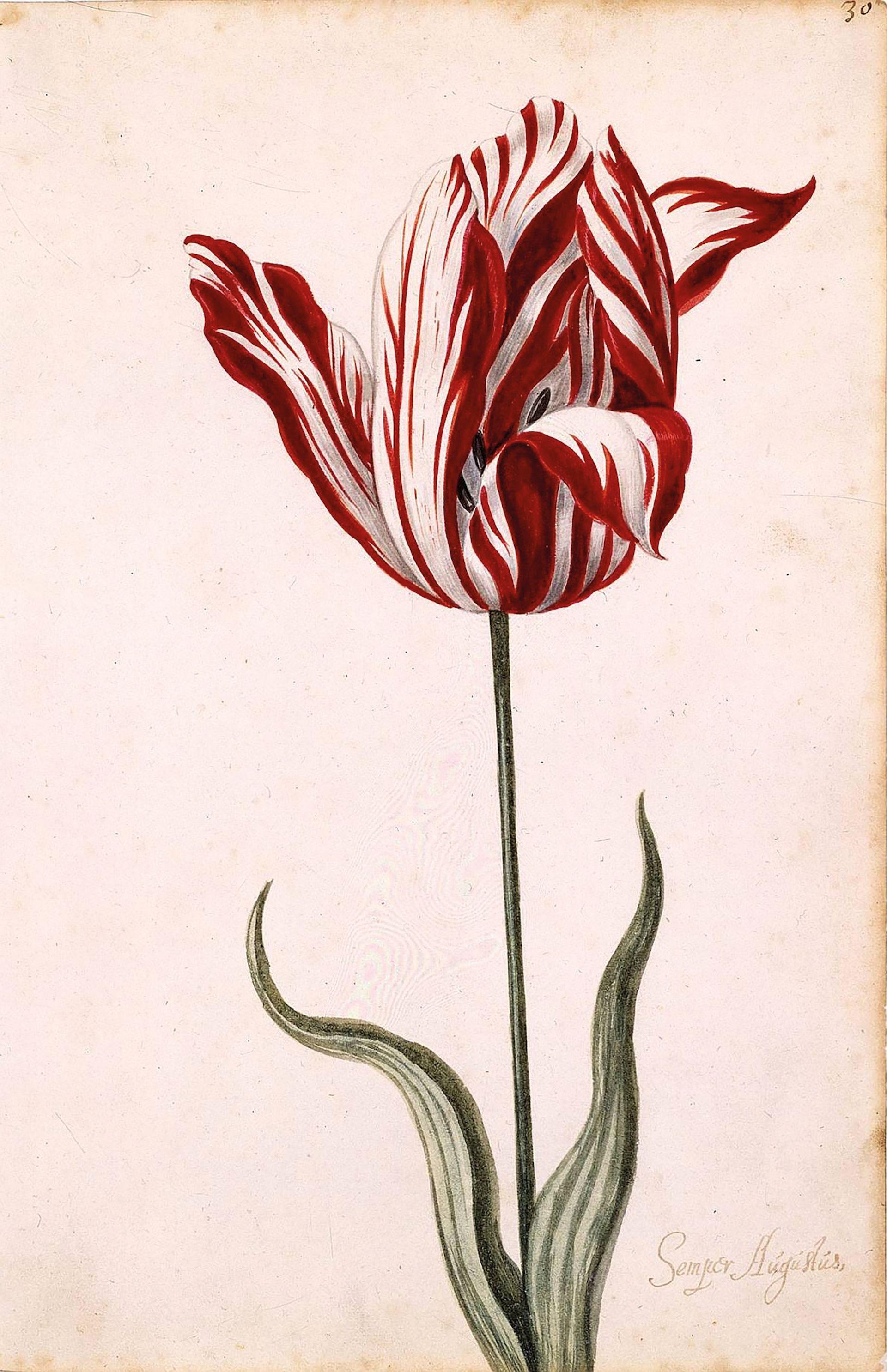 At tulipmania's peak in 17th-century Holland, specimens cost the same as a mansion Norton Simon Art Foundation