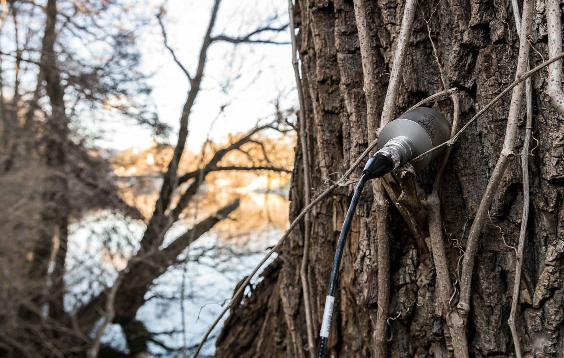 """For another sound art project, the artist Bill Fontana attached an accelerometer to a tree along the Mur River in Austria to record the sounds a tree """"hears"""""""