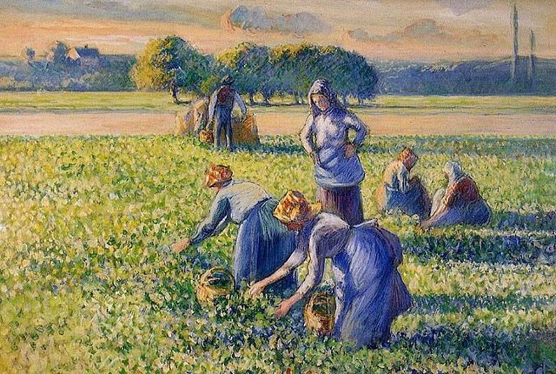 La cueillette des pois (The Pea Harvest, 1887) by Camille Pissarro Public domain via Wikimedia Commons
