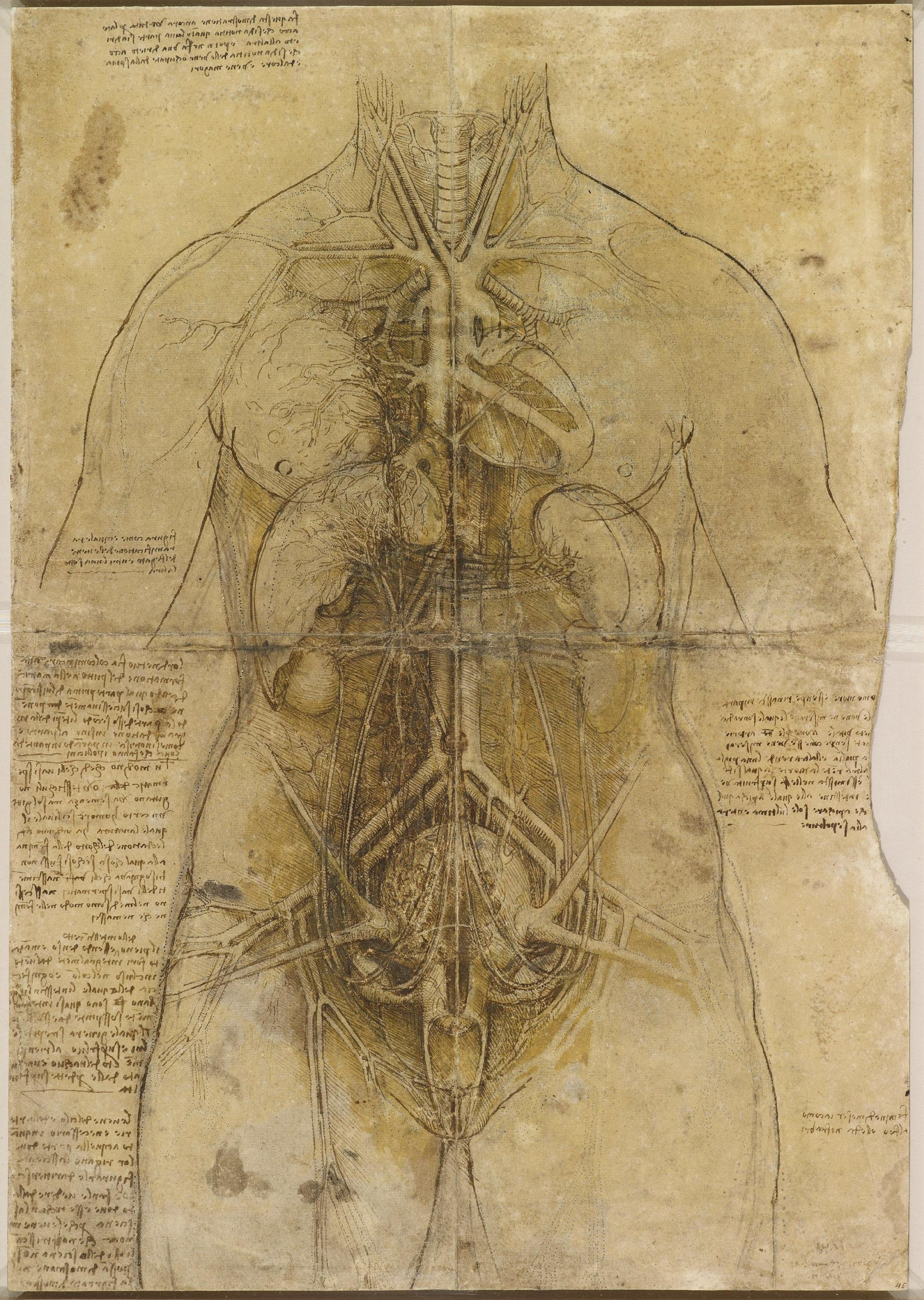 Leonardo da Vinci's The Cardiovascular System and Principal Organs of a Woman (around 1509-10) carries two fingerprints from the master artist; the thumb mark can be found beside the left side, by the arm of his subject Courtesy of the Royal Collection Trust; © Her Majesty Queen Elizabeth II 2019