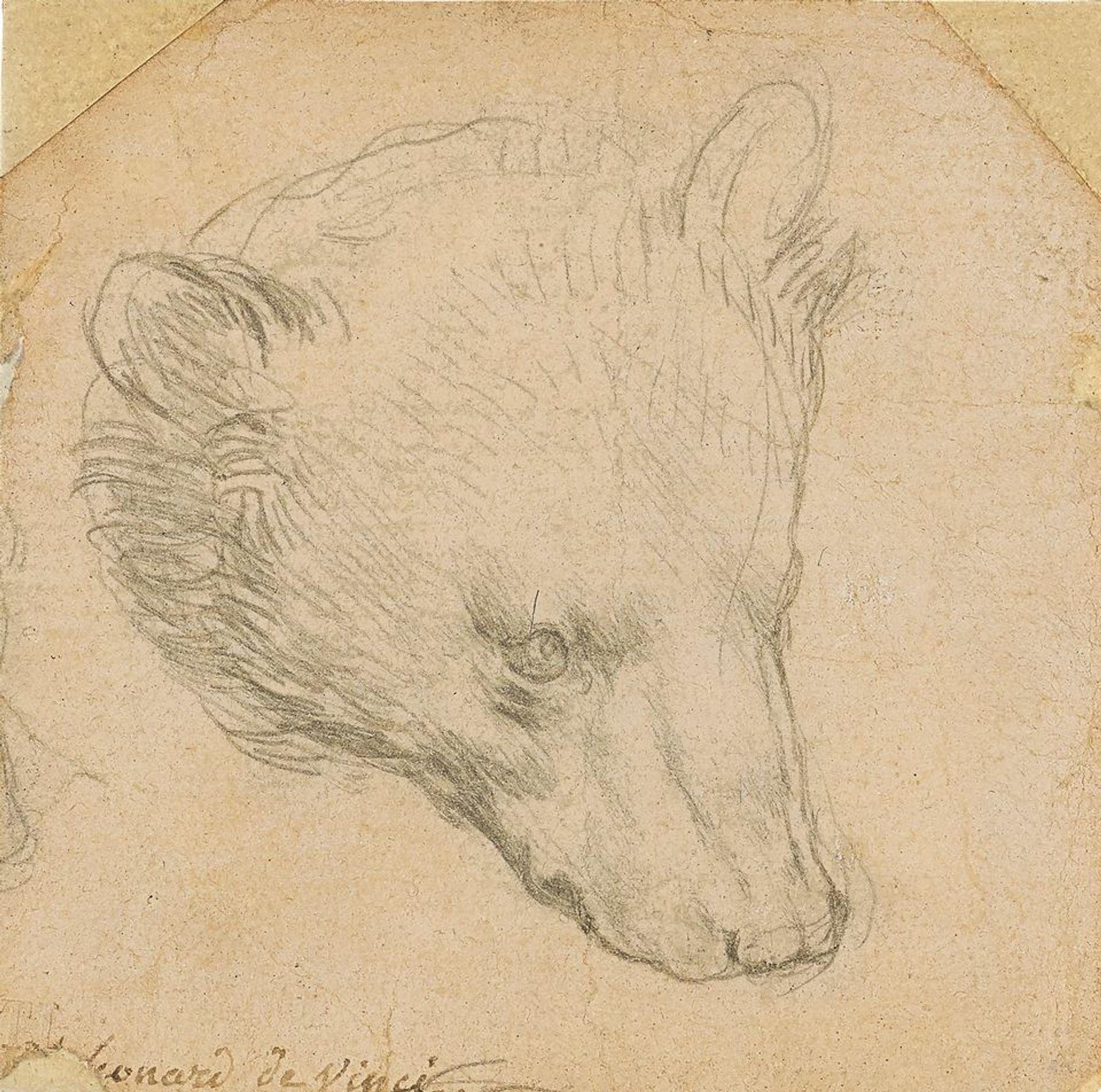 Leonardo da Vinci's Head of a Bear (around 1480) Courtesy of Christie's