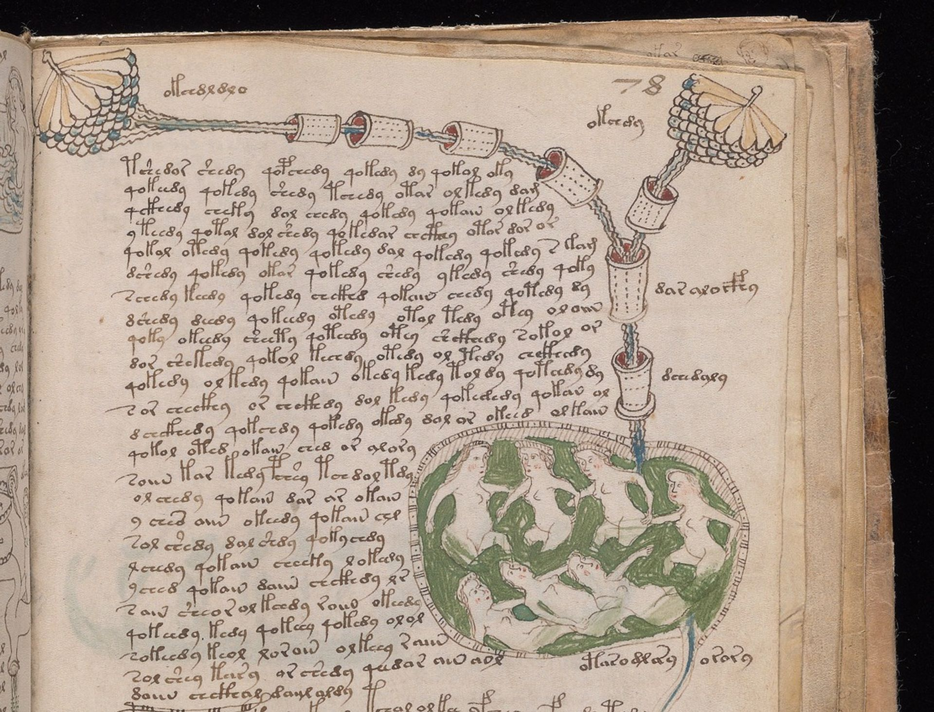 Detail from a page of the Voynich Manuscript Beinecke Rare Book and Manuscript Library at Yale University