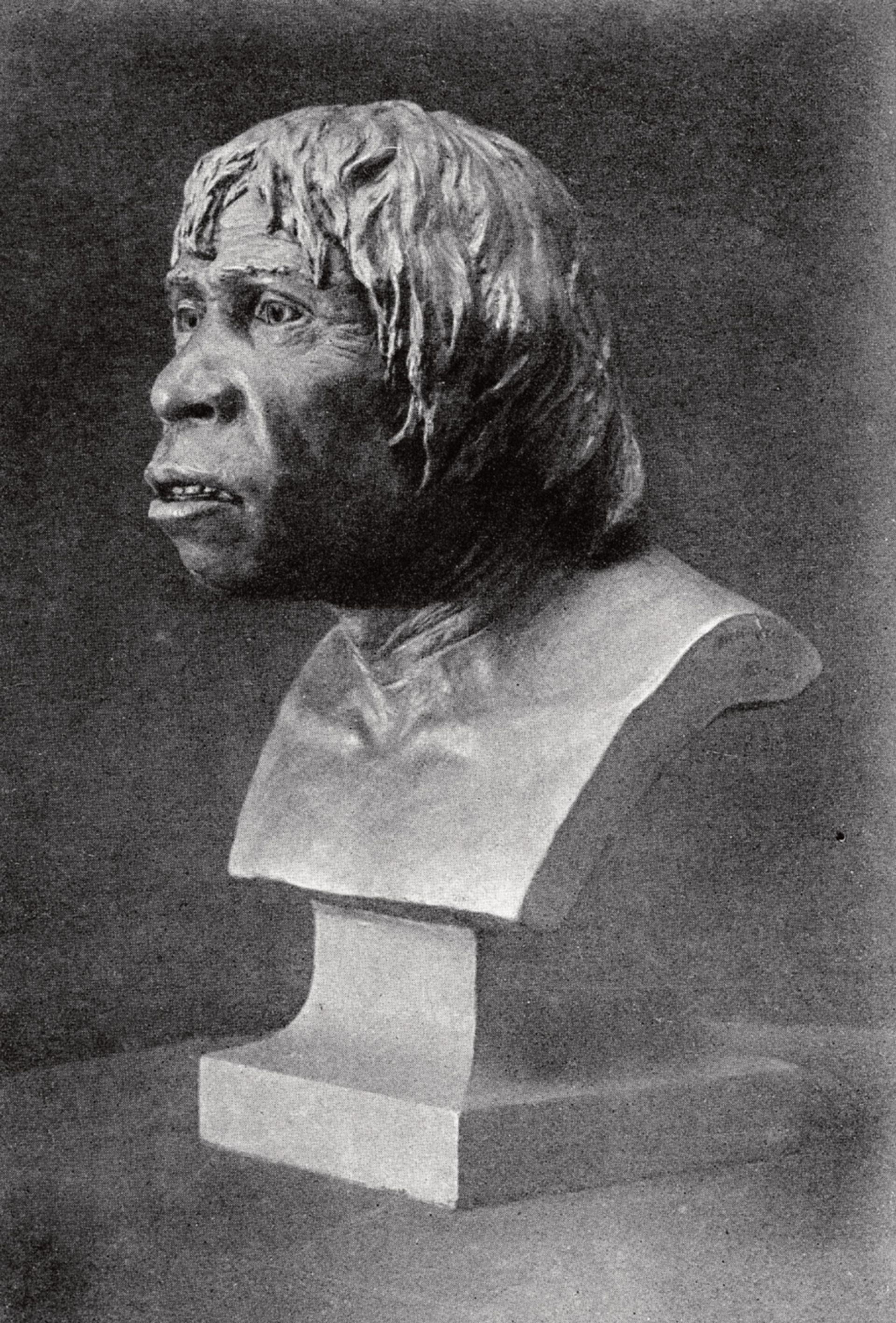 A bust of Britain's most famous fake, Piltdown Man © Wellcome Collection