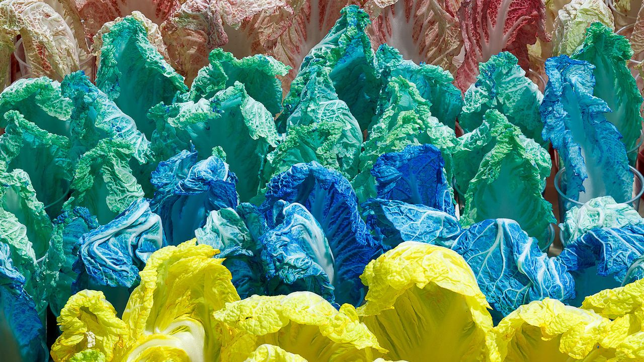 Stary Mwaba, Copper, Cobalt and Manganese Cabbage (2015) Courtesy of KfW Stiftung. Photo: David Brand for Künstlerhaus Bethanien