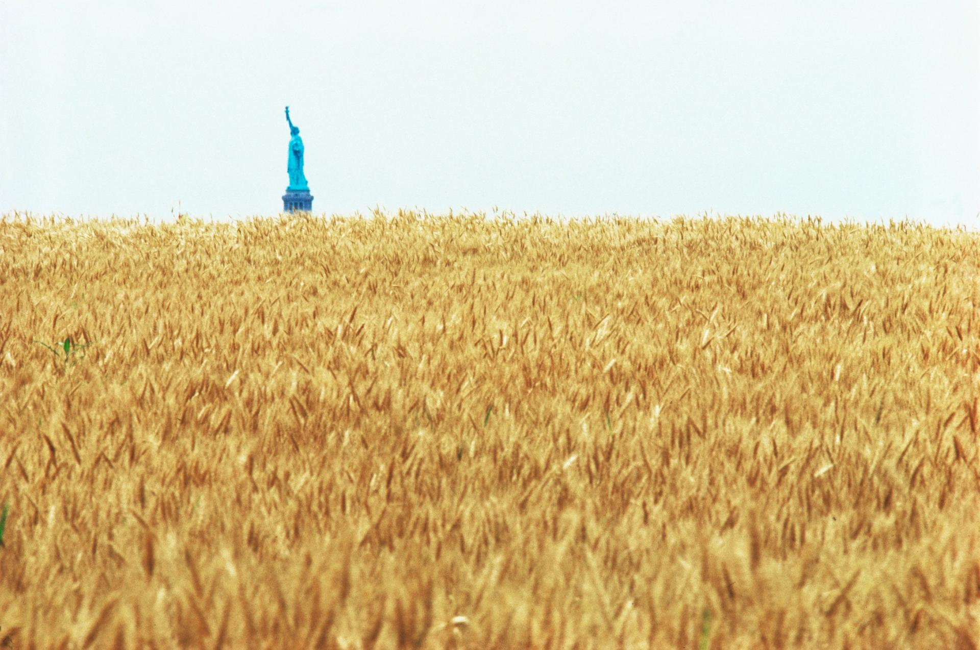 Agnes Denes's Wheatfield—A Confrontation involved the artist planting and harvesting two acres of wheat on the Battery Park landfill in Manhattan during the summer of 1982 Commissioned by Public Art Fund. Courtesy the artist and Leslie Tonkonow Artworks + Projects