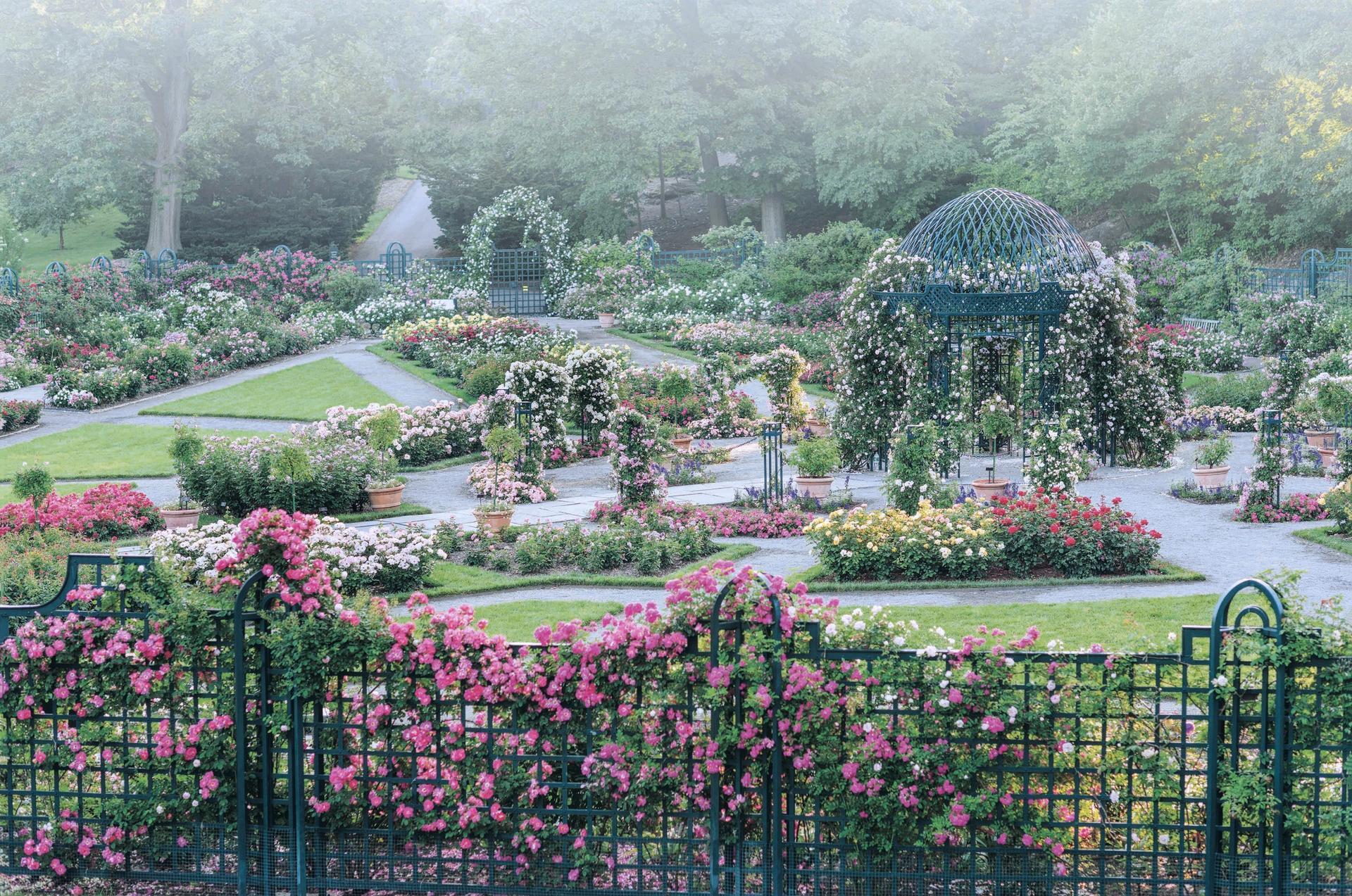 The Peggy Rockefeller Rose Garden in the New York Botanical Garden © 2019 Georgianna Lane