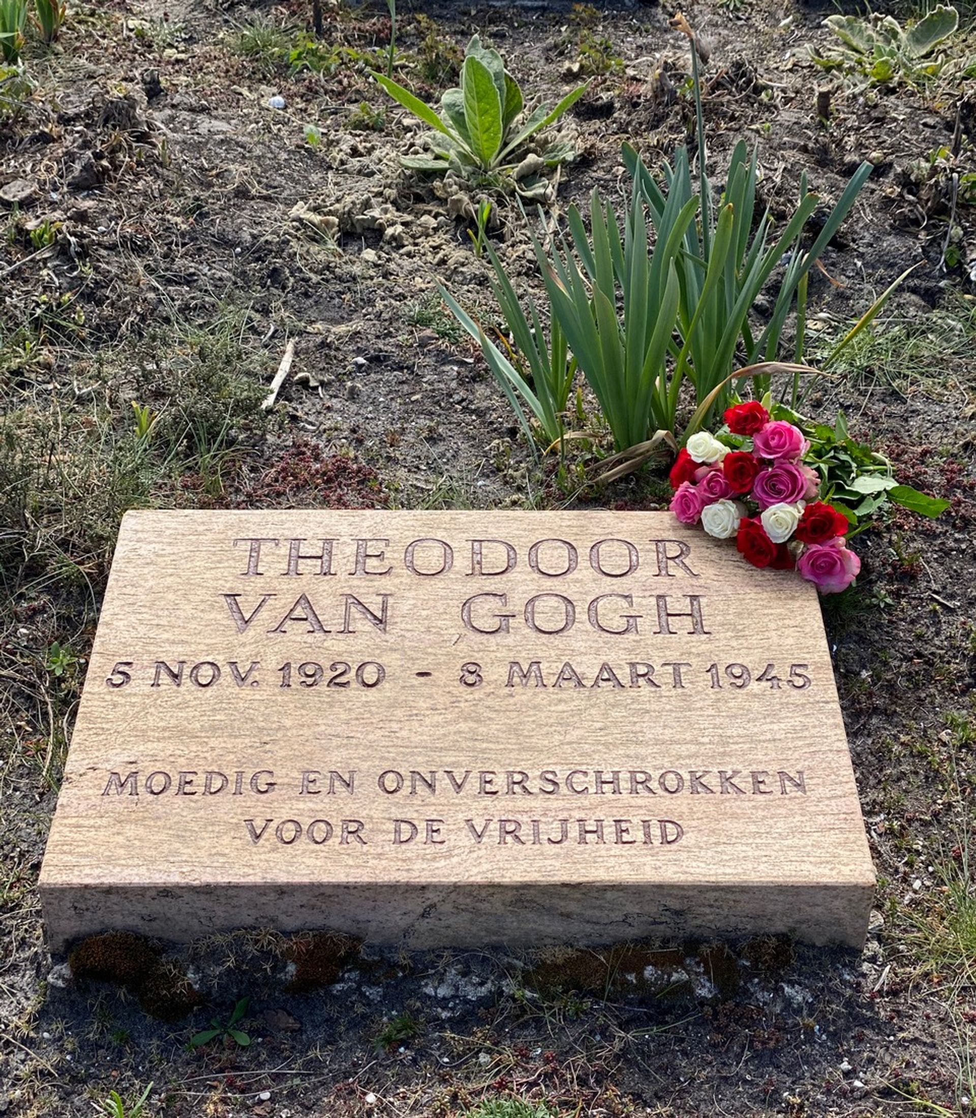 The grave of Theodoor van Gogh (1920-45) with roses, Field of Honour Cemetery, Overveen, Netherlands Courtesy of Willem van Gogh, Amsterdam