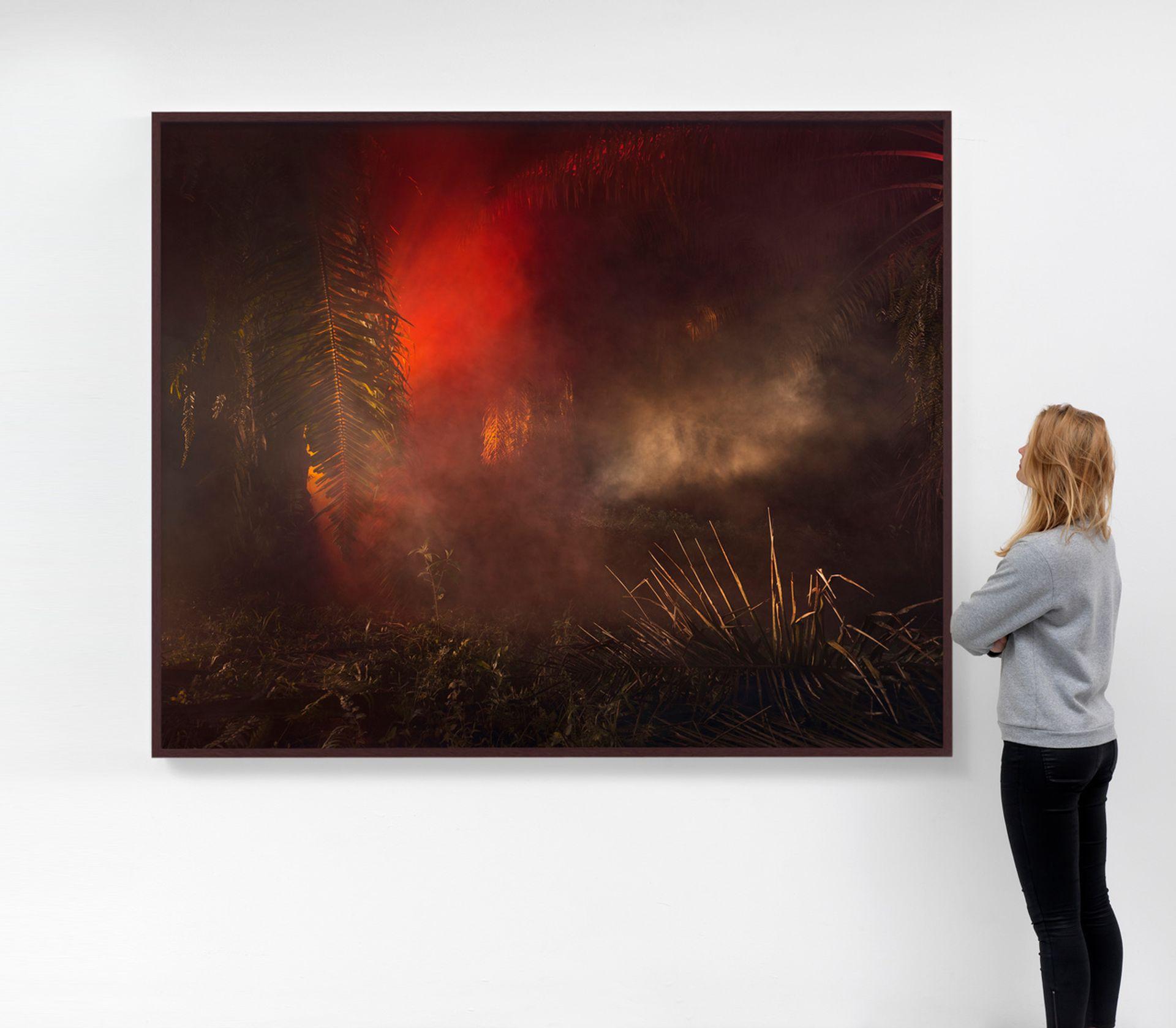 Julian Charrière, An Invitation to Disappear- Kinabatangan (2018) Courtesy of Dittrich & Schlechtriem, Berlin; Sies + Höke, Düsseldorf