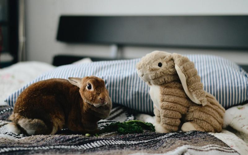Kuscheltier Hase