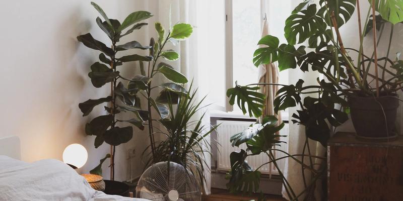 Schlafzimmerpflanzen