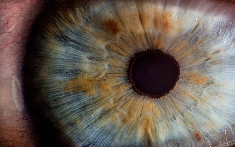 Aristoteles über Träume: Makroaufnahme Auge
