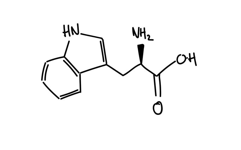 Tryptophan Struktur