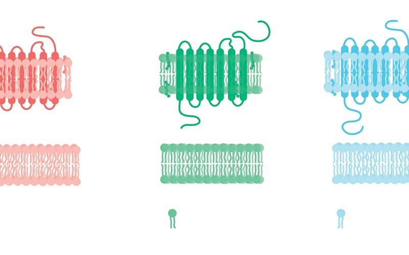 Transmembranärer Rezeptor