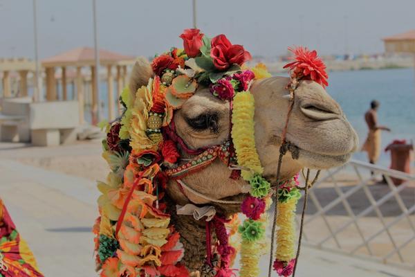 Kamel mit blumig-gutem Duft in der Nase