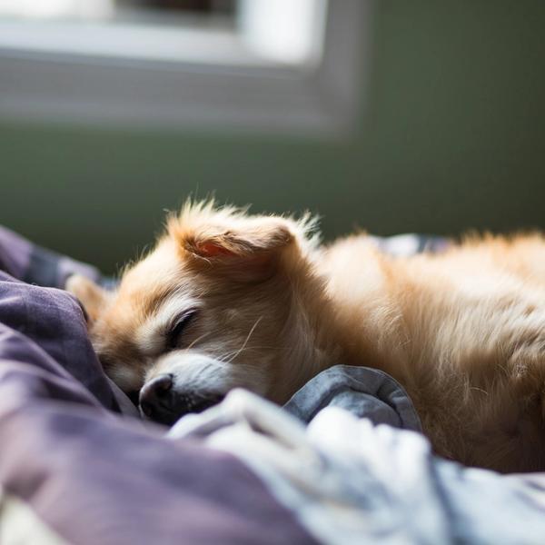 Hund Schlaf