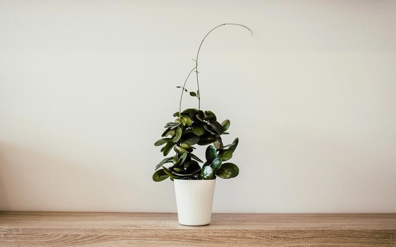Feng Shui Schlafzimmer Pflanze Blumentopf