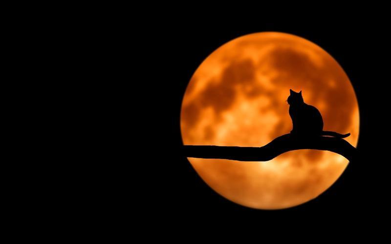 Katze Vollmond Nacht
