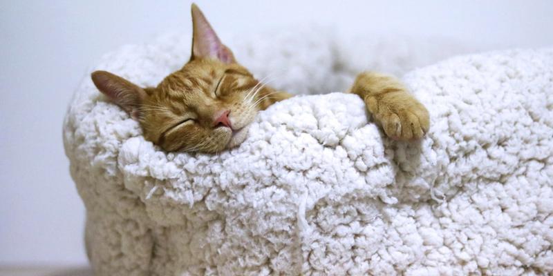 Schlafende Katze im Korb.
