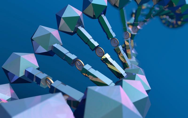 DNA, die Uhren enthält