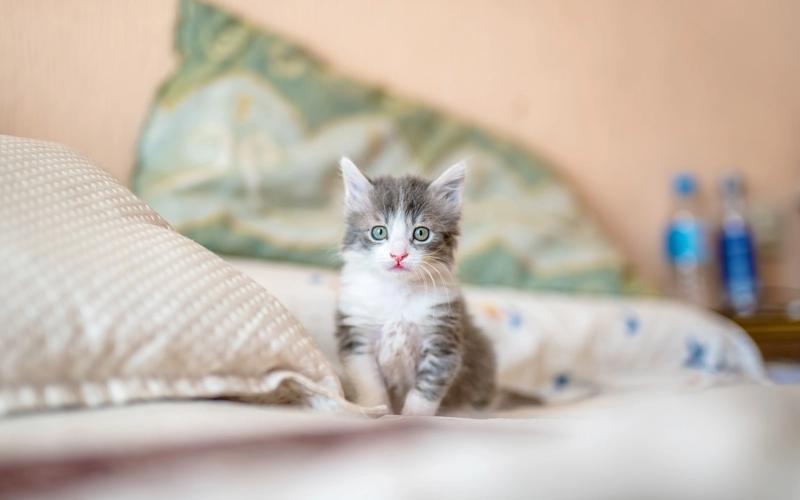 Babykatze im Bett.