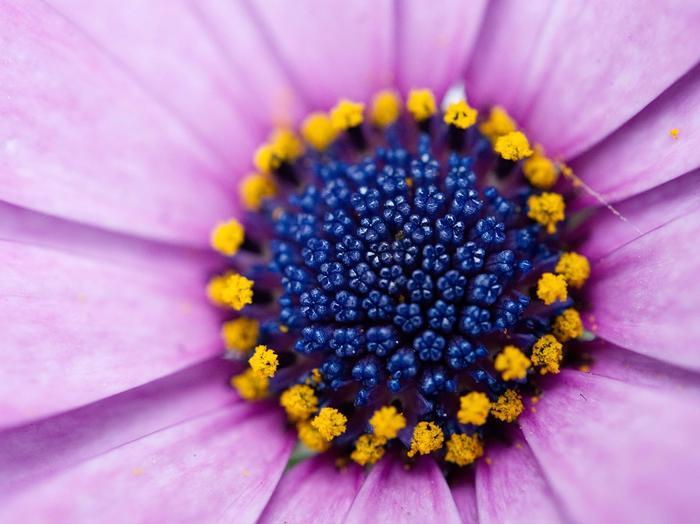 Schlaftipps bei Pollen