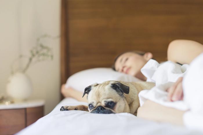 powernap Frau mit Hund im Bett