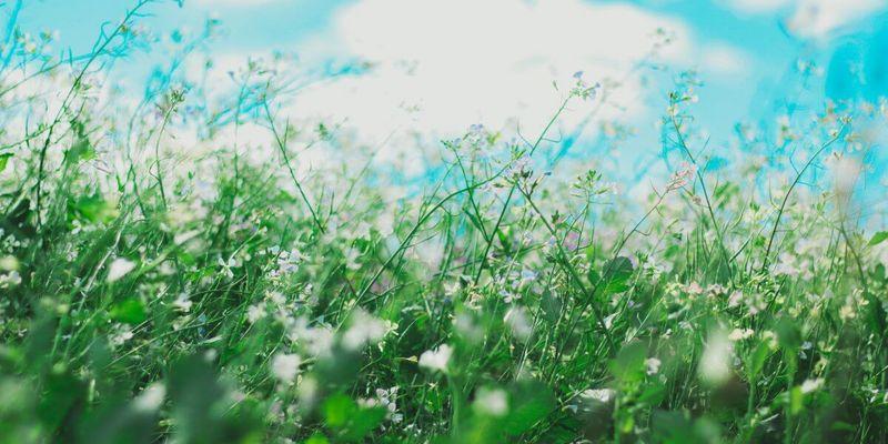 Blühende Pflanzen Antihistaminika