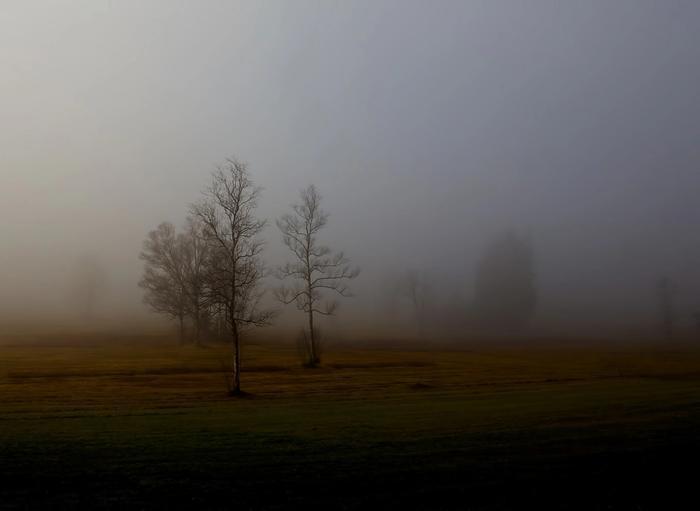 Landschaft: Bäume im Nebel