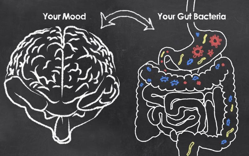 Gehirn, Darm, Wechselwirkungen, gezeichnet