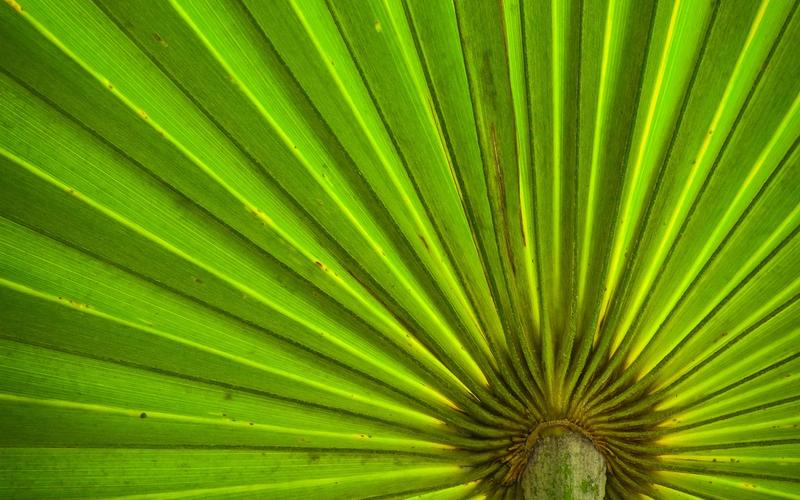 Pflanze mit gefalteten Blättern