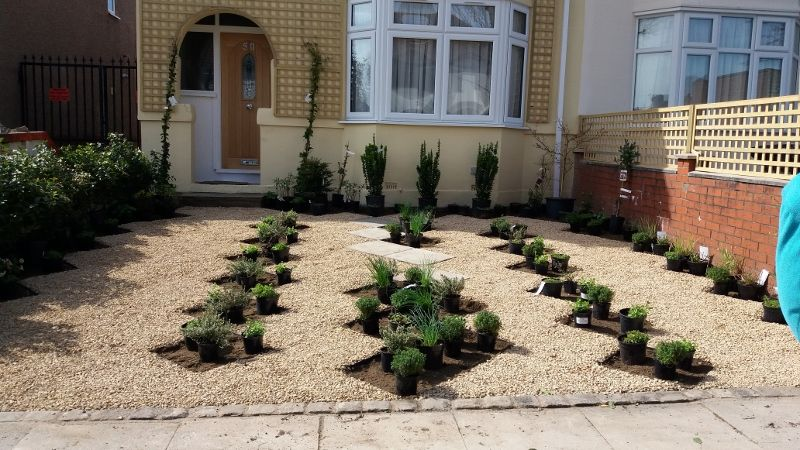 Plants placed ready for planting