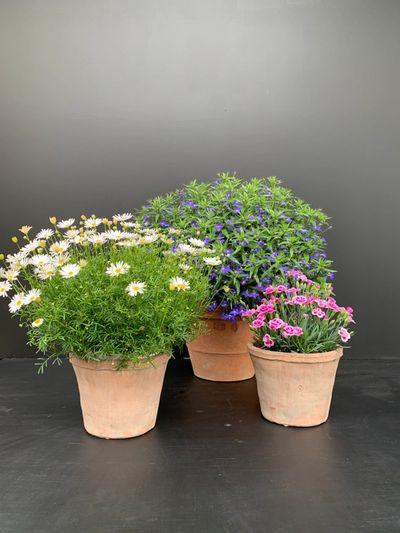Bloemende planten