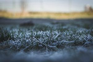 tree-water-nature-grass-branch-winter