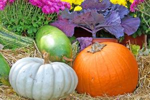 plant-hay-fall-flower-food-produce