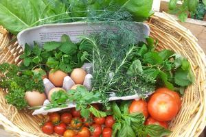 table-nature-plant-wood-farm-vegetables