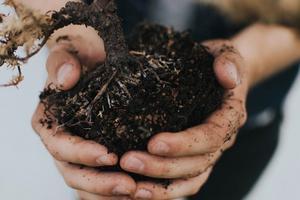 potting - soil - dirt - fertilizer