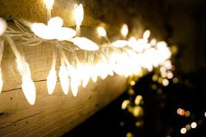 tree-branch-light-plant-night-sunlight
