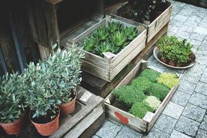 plant-sidewalk-flower-pot-herb-produce