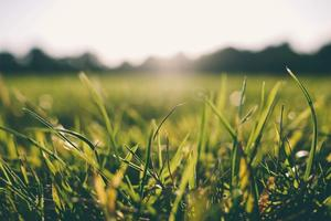 Grass-Lawn-Sod