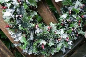 snow-winter-plant-leaf-flower-decoration