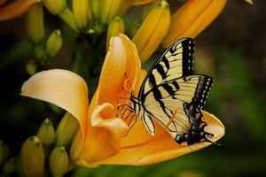 Plant-flower-butterfly